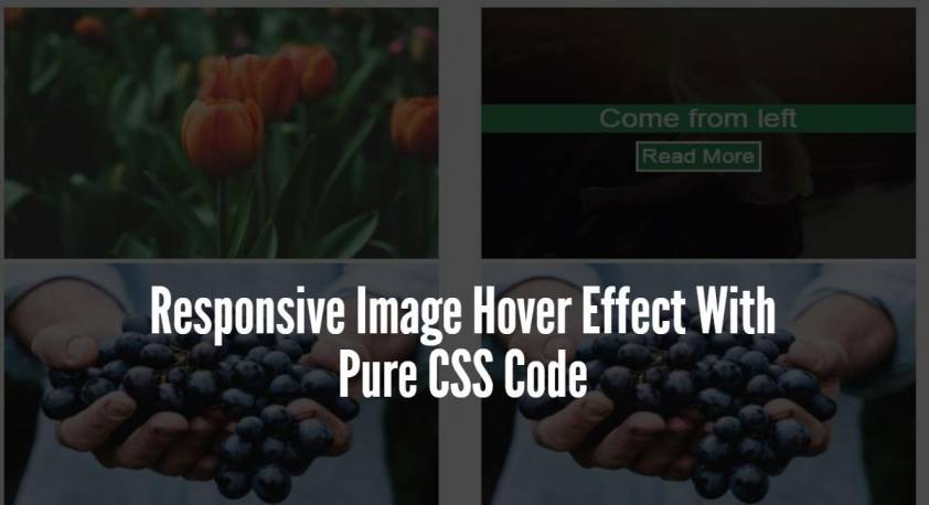 Responsive Image Hover Effect With Pure CSS Code