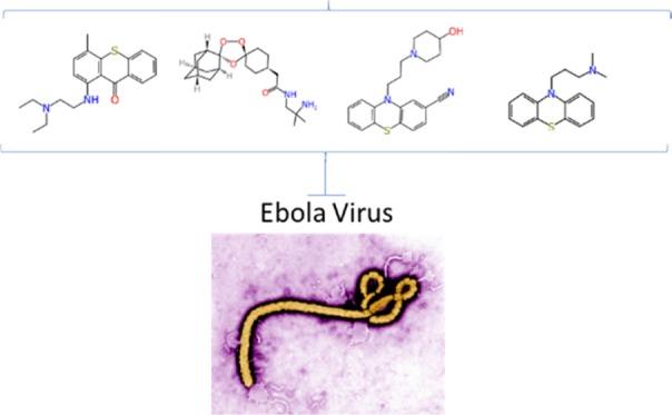 Ebola Virus Image